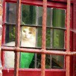 La bella gata prisionera