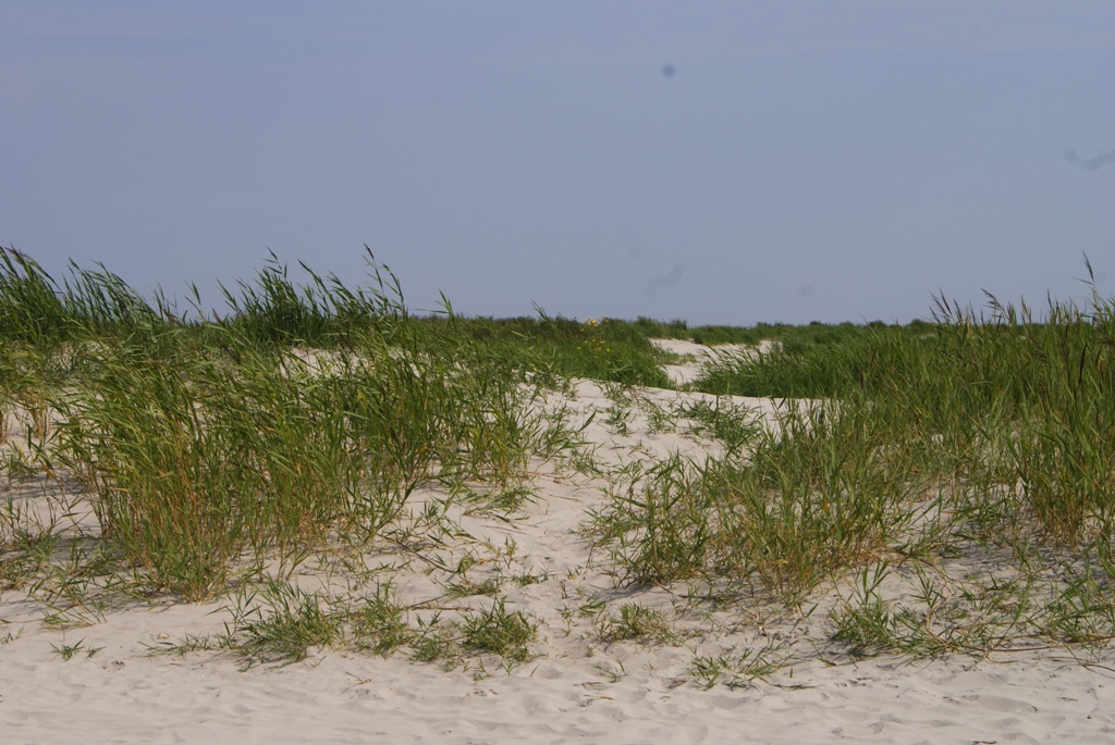 Las arenas de la isla de Schiermonnikoog en Holanda