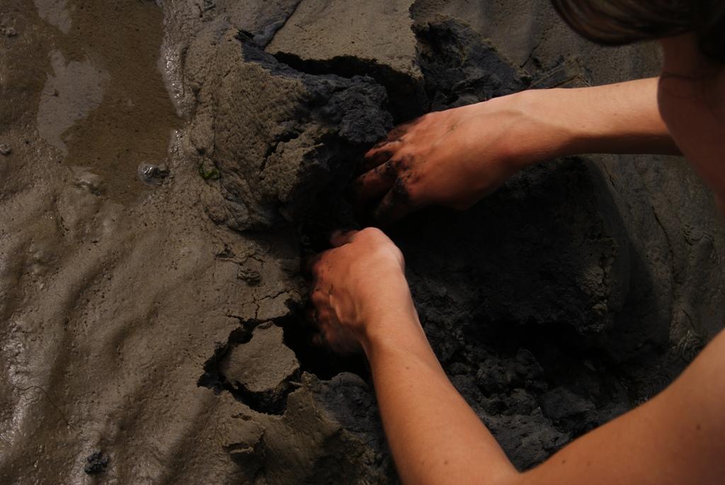 manos sucias buscando organismos vivos en el fondo marino durante wadlopen en la isla de Schiermonnikoog, Holanda
