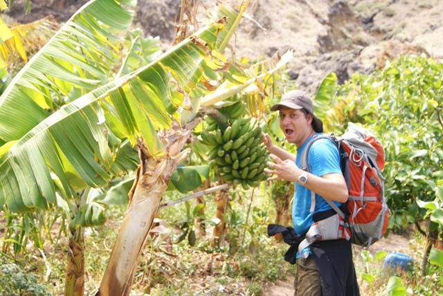 Vimos cómo crecen plátanos de Canarias por primera vez