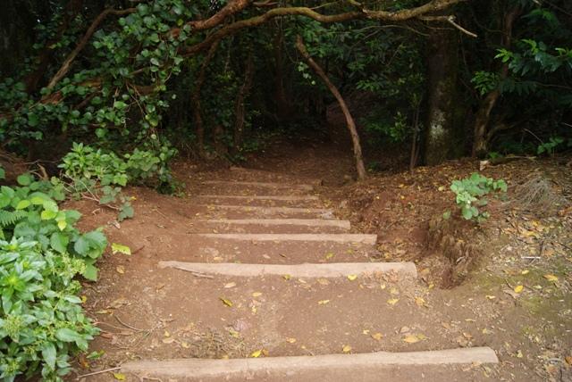 Paseos por laurisilva de Tenerife