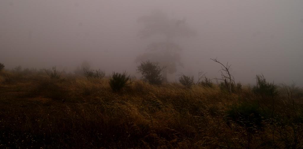 un poco de niebla y fantasmas