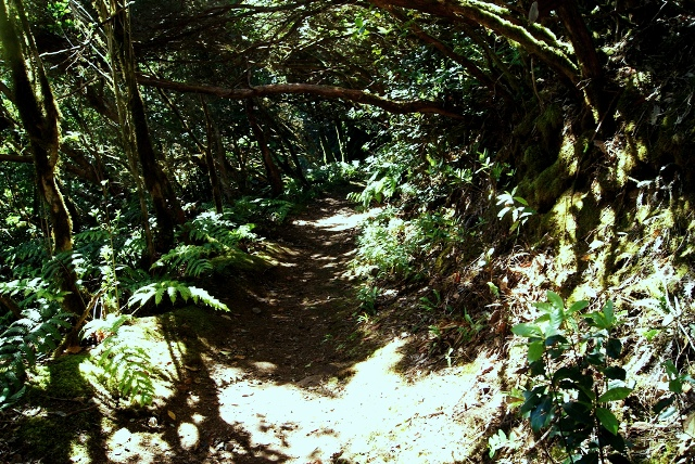 bosques de anaga