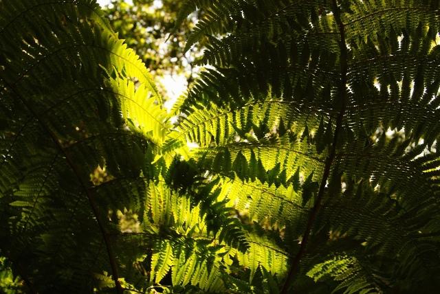 bosques de tenerife
