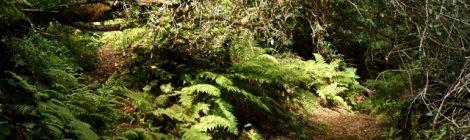 Ruta fácil por el bosque de laurisilva en Tenerife