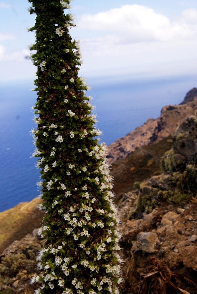 Arrebol Tenerife