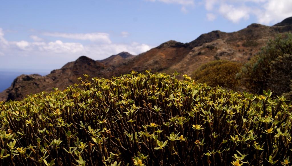 ruta Tenerife