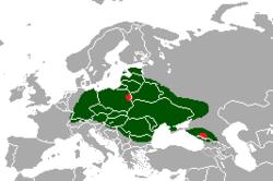 Belovezhskaya Pushcha, Bielorrusia, Russia Blanca, Parques Naturales