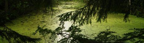 Belovezhskaya Pushcha, Brest, Bielorrusia, Bielorussia, parques nacionales, naturaleza