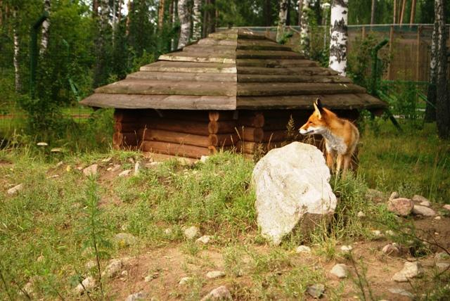 Berezinska Reserva, Bielorrusia, Russia Blanca, Bielorussia, naturaleza