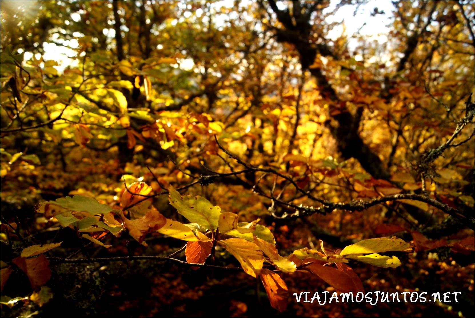 guadalajara, segovia, sistema central. rutas, ayllón, senderismo, monte, montaña, sierra, otoño, somosierra