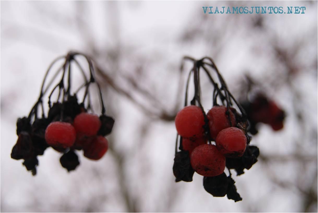 Ukraine, tradiciones, Año Nuevo, Año Nuevo Viejo, Ucrania