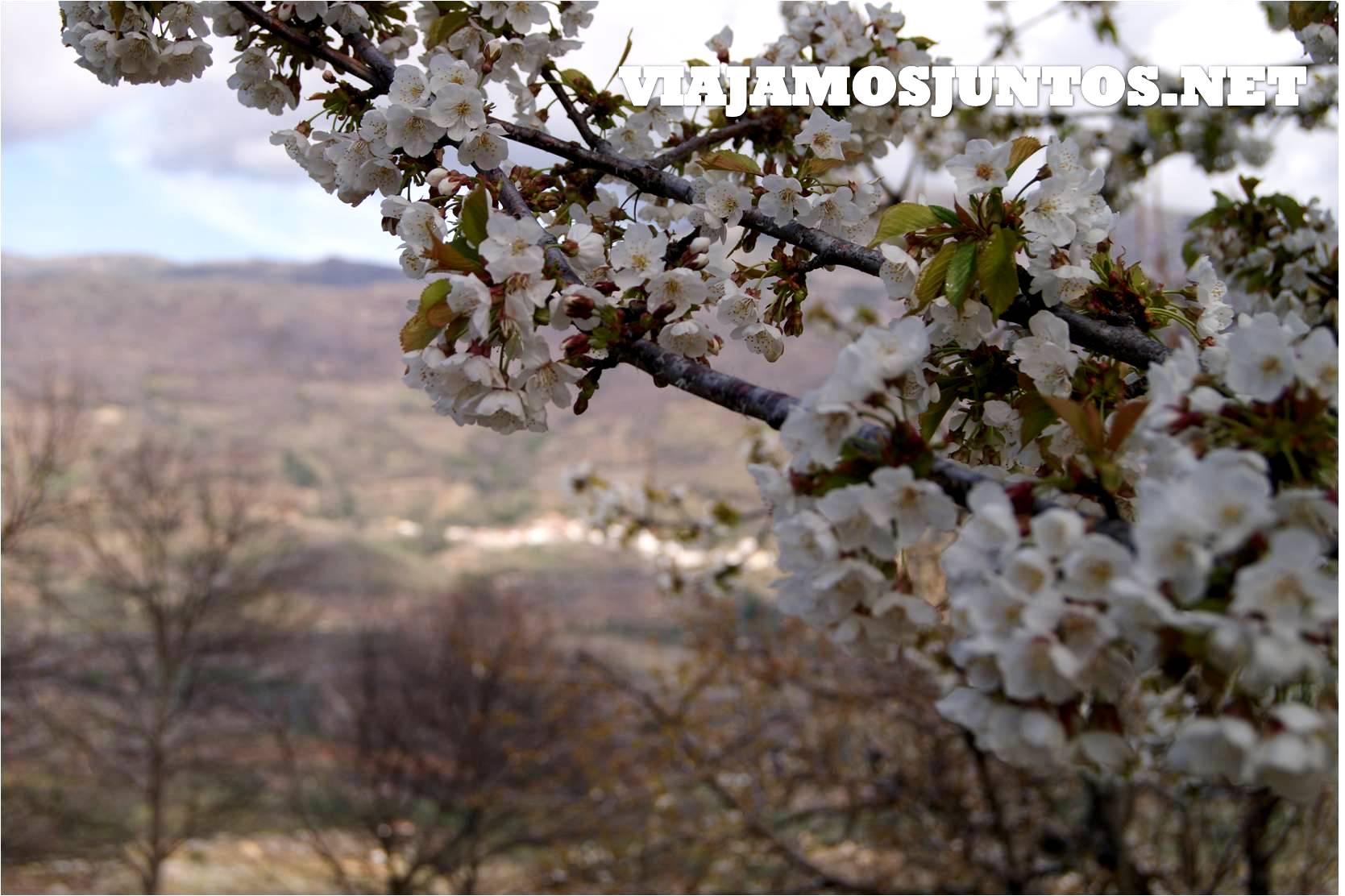 Valle del Jerte, Jerte, Cerezo en flor, Primavera en Jerte, rutas, escapadas, pueblos con encanto
