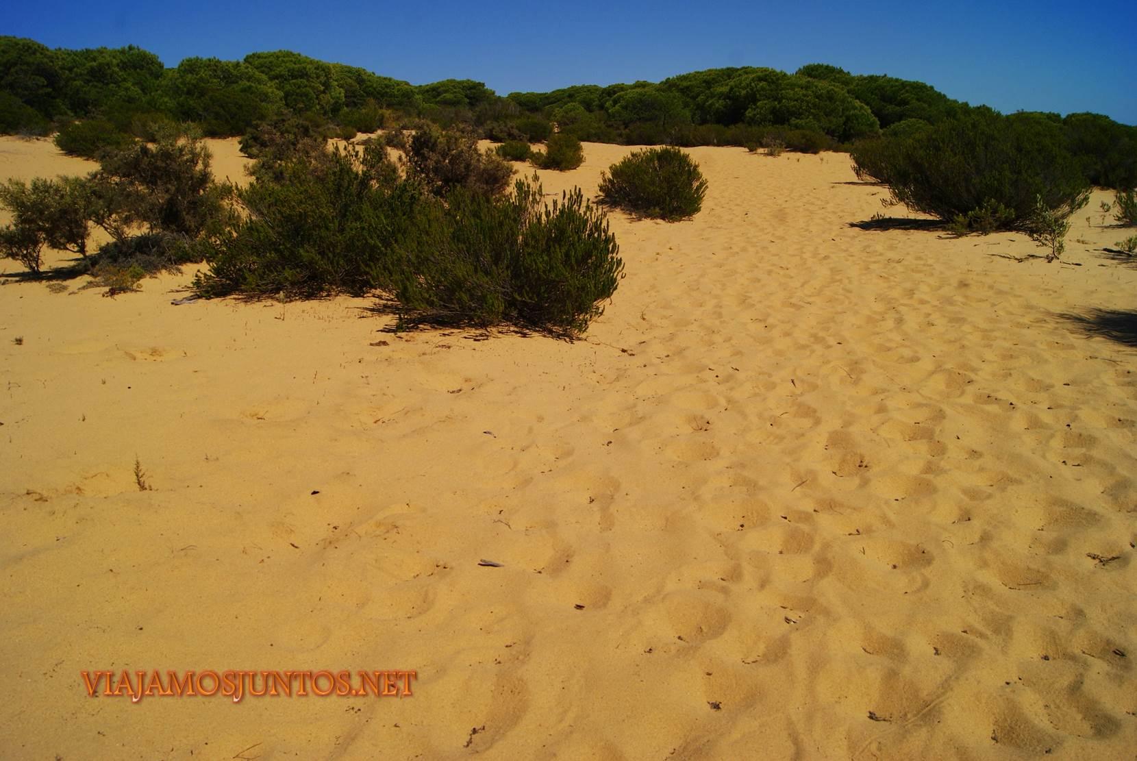 Doñana, parque natural, parque nacional, parque dunar, dunas, dunas fijas, huelva, andalucia, acantilado, senderismo, rutas