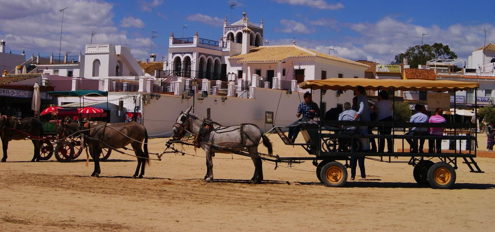 Doñana, asperillo, laguna Jaral, parque natural, parque nacional, parque dunar, dunas, dunas fijas, huelva, andalucia, acantilado, senderismo, rutas, el Rocío