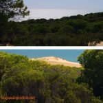 Doñana, asperillo, laguna Jaral, parque natural, parque nacional, parque dunar, dunas, dunas fijas, huelva, andalucia, acantilado, senderismo, rutas