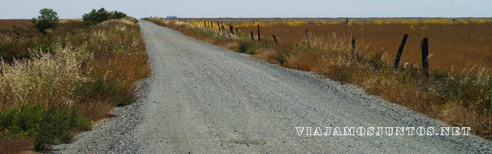 Doñana, rutas, senderismo, centros de interpretación, rocina el rocio, huelva, andalucia, acebuche, jose valverde
