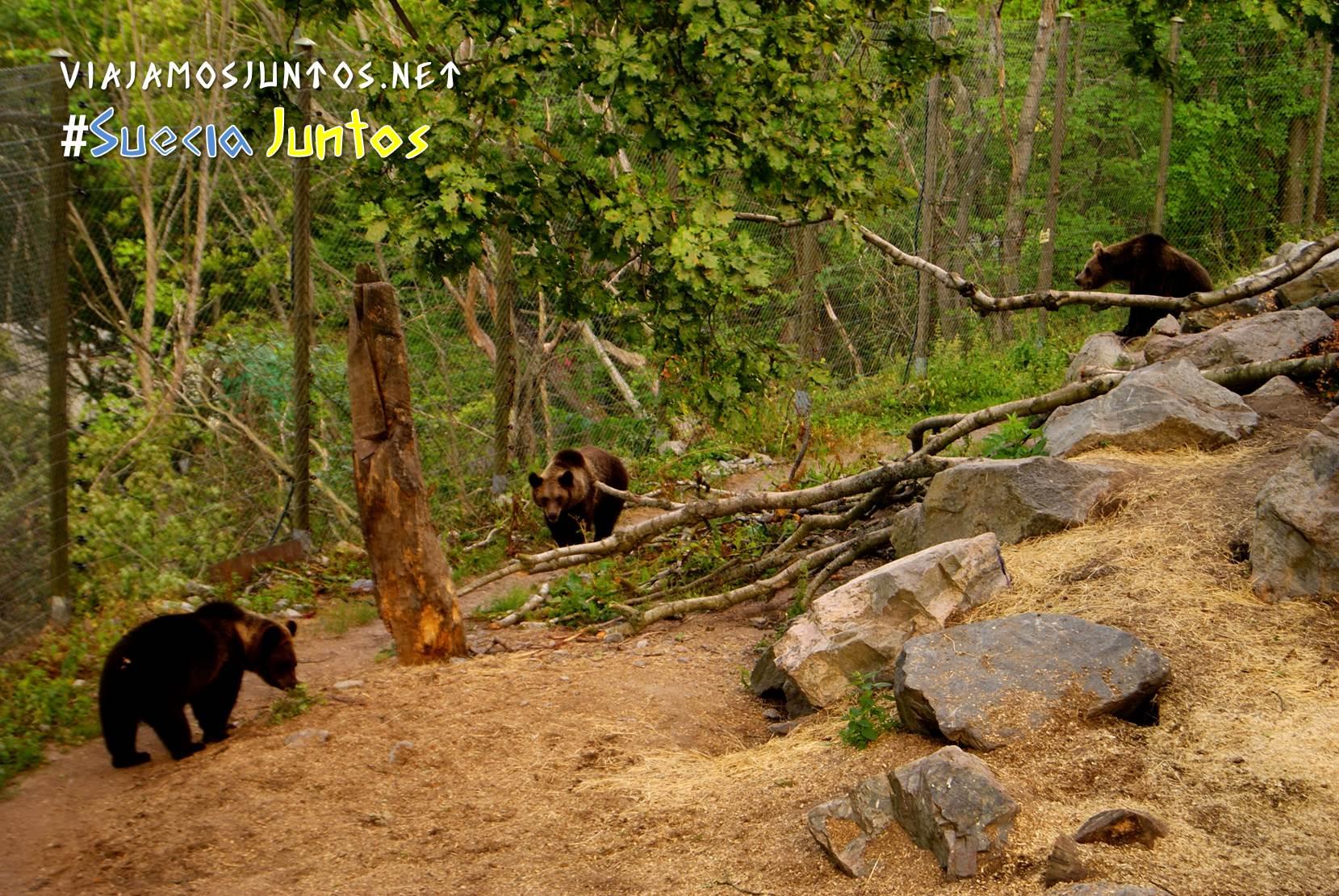 Una familia de osos en Skansen, Estocolmo, Suecia