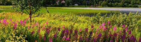 Gällivare, Suecia, fjordos, lagos, naturaleza, viajar por libre, vistas, paisajes, Laponia Sueca, inspiración