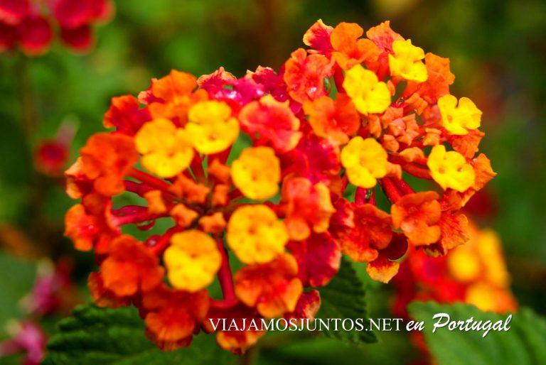 las flores en naranja y amarillo en Azeitao, Portugal