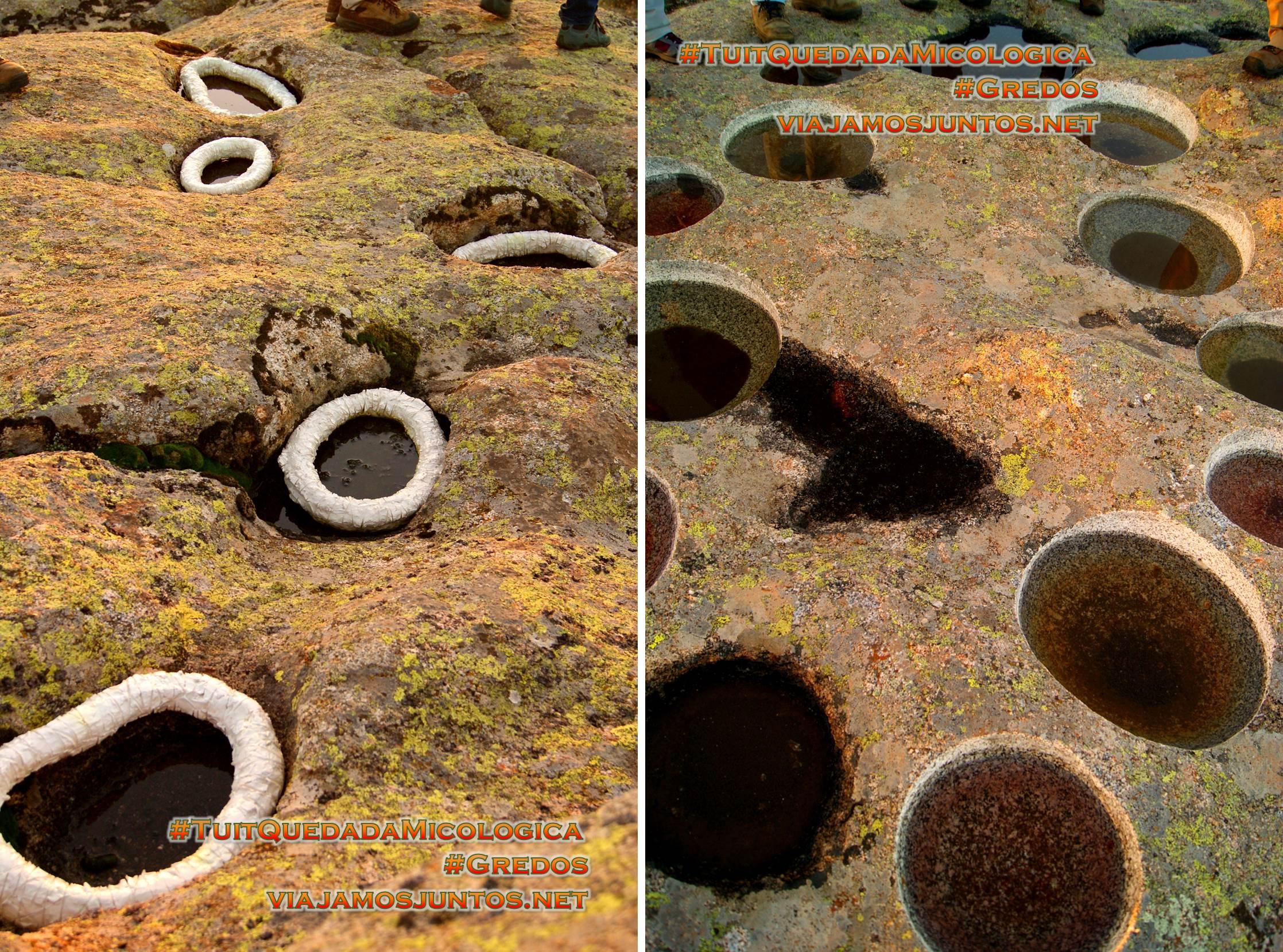 Obras de arte al atardecer en el Cerro Gallinero, Hoyocasero, Gredos, durante la #TuitQuedadaMicologica