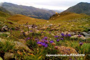 GRP de Andorra, trekking por los Pirineos Orientales; las flores que dan vida a los valles