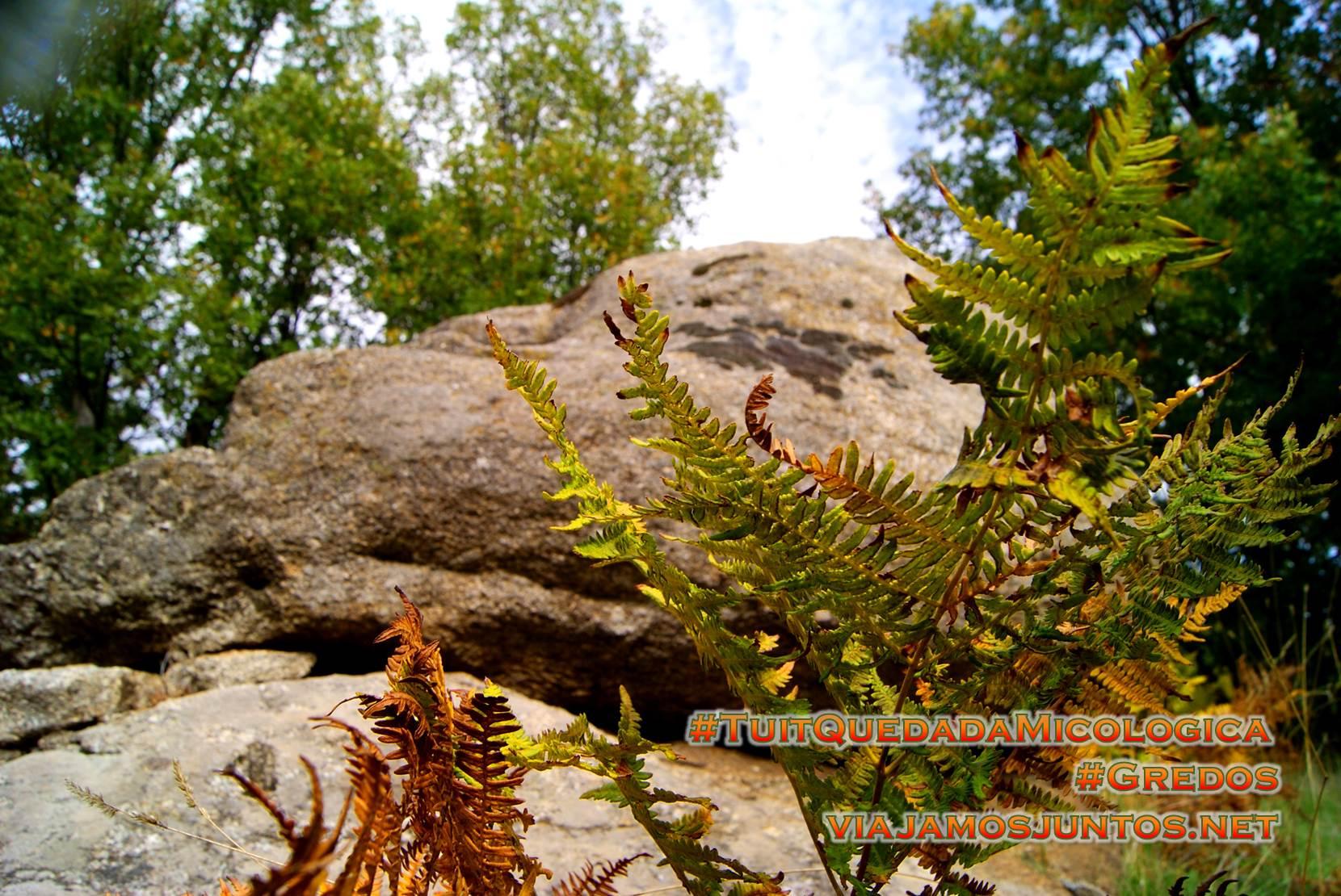 Piedra sagrada, Hoyocasero, Gredos, durante la #TuitQuedadaMicologica