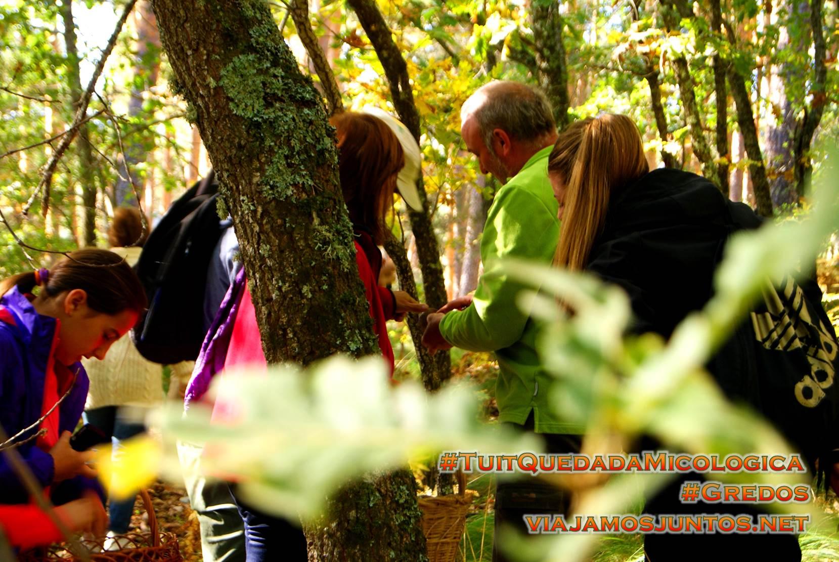 Cogiendo setas en el Pinar de Hoyocasero, Gredos, durante la #TuitQuedadaMicologica