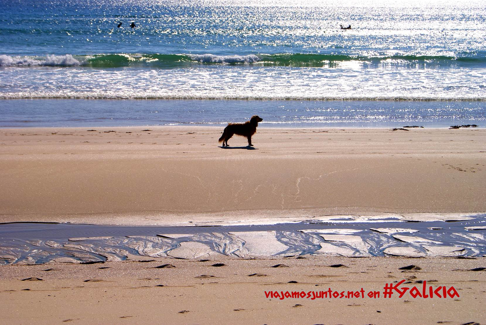 Playas de la Costa da Morte, Galicia; perro surfista