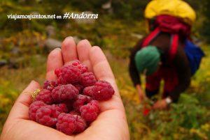 Frutas en GRP de Andorra