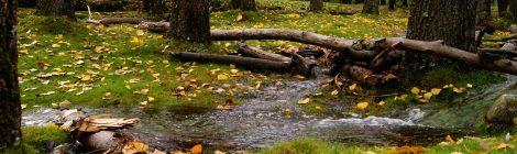 senderismo y recolecta de setas en Rascafría, Madrid; otoño