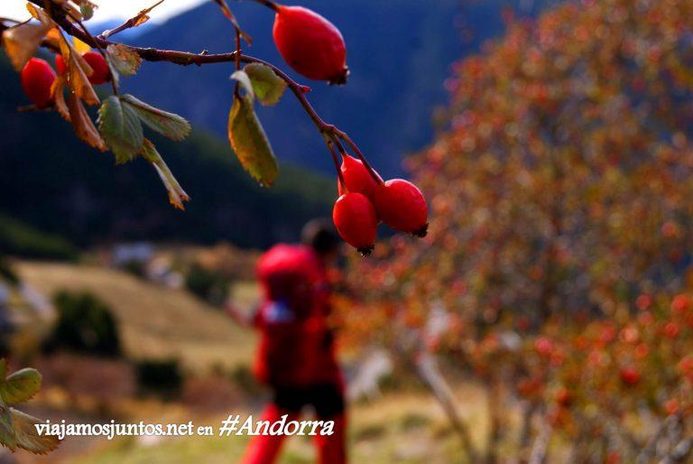 GRP de Andorra, un gran trekking alrededor del país, en los Pirineos Orientales; otoño al mando