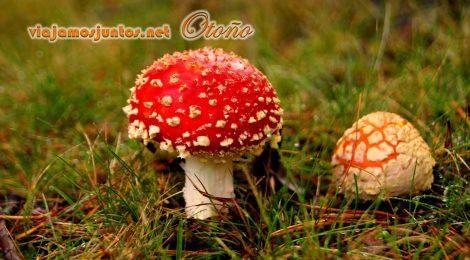 Cuidado con setas tóxicas, aunque muy fotogénicas; Rascafría, Madrid; otoño