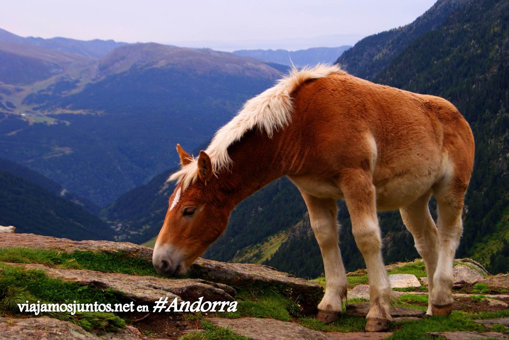 Caballos en el GRP de Andorra, trekking por los Pirineos Orientales