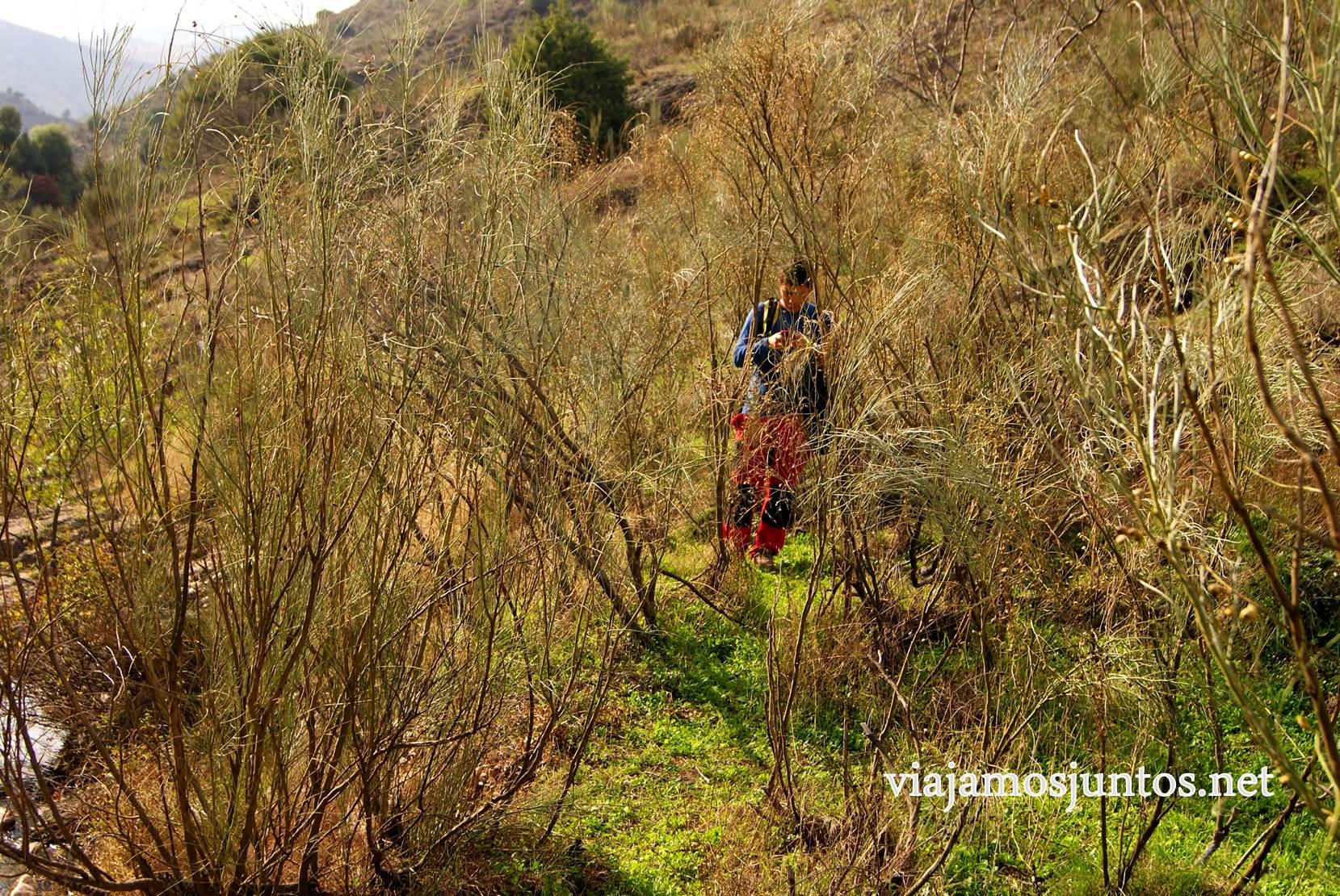 Ruta a las Cárcavas, Patones, Madrid; senderismo por sitios singulares de la Comunidad de Madrid; caminos de cabras