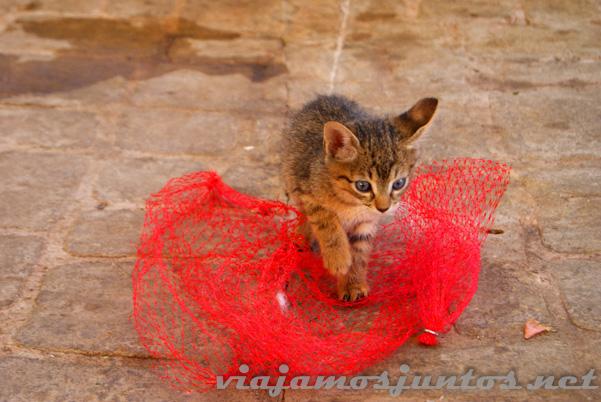 Gatos... omnipresentes en Túnez