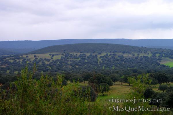 Las dehesas en las fincas de Extremadura, Parque Nacional de Monfragüe y la Reserva de la Biosfera de Monfragüe, Extremadura