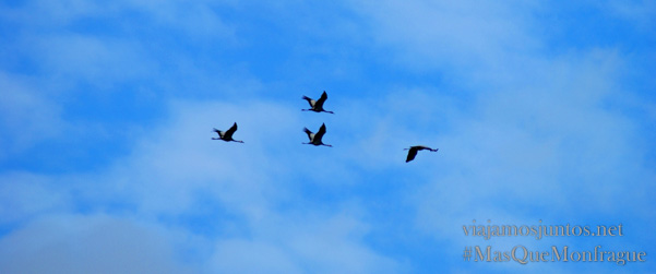 """Las grullas reorganizándose en la """"V"""" después del ataque de una águila, Parque Nacional de Monfragüe y la Reserva de la Biosfera de Monfragüe, Extremadura"""