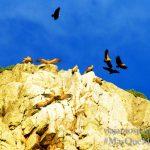 Buitres En el vuelo, Parque Nacional de Monfragüe y la Reserva de la Biosfera de Monfragüe, Extremadura