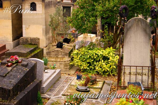 Los gatos del cementerio... Cementerios de París, Montmarte. Francia