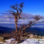 Vistas con un árbol, Ruta cirular de Siete Picos, Sierra de Guadarrama, Parque Nacional Guadarrama, Madrid y Castilla y León