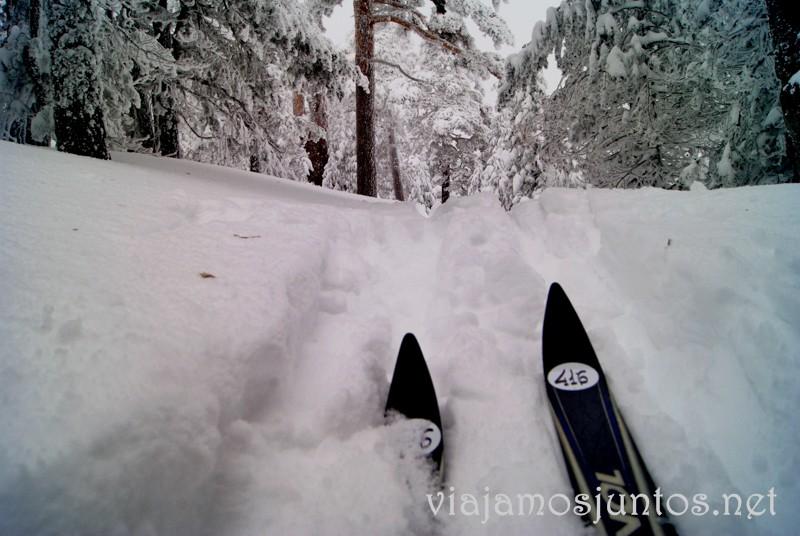 Magia del esquí de fondo. Esquí de fondo, una ruta de senderismo y trineos, y mucha diversión en la nieve en Navacerrada, Sierra de Guadarrama, Parque Nacional. Madrid