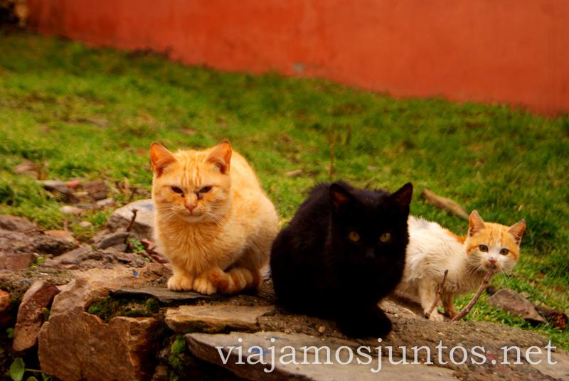 La banda gatuna Pueblos con encanto de la Sierra Norte de Madrid, Puebla de la Sierra, la Hiruela