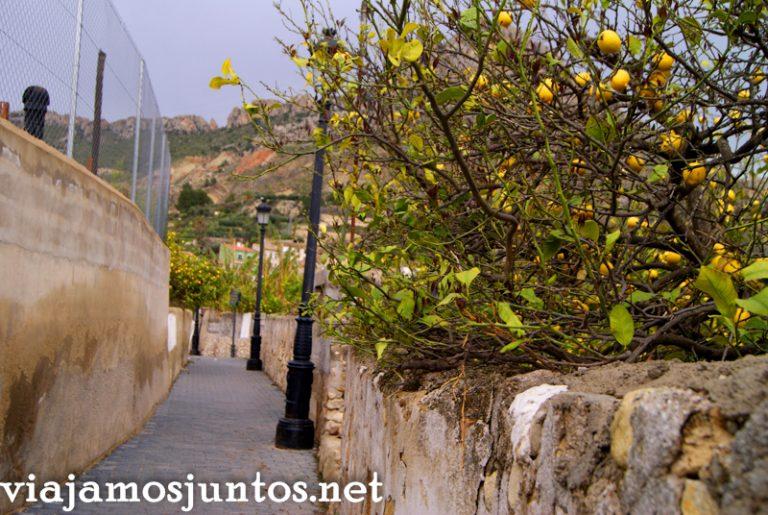 Limones y más limones en Ojós Ruta en coche por el Valle de Ricote, Murcia. Pasado islámico