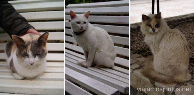 Y más gatitos Balneario de Archena, Murcia #MaratónDelRelax #RumboSurJuntos