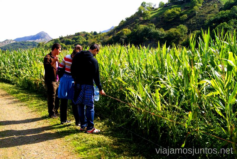 ¿Comemos maíz? Asturias, que hacer, donde ir; montaña, playa, pueblos con encanto