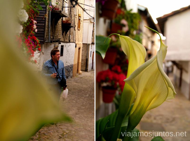 Las calles en flor Hervás, Extremadura, que ver y hacer. Pueblos con encanto