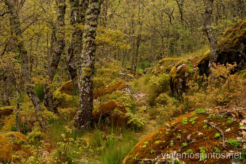 Bosque virgen... o eso parece Ruta de la Chorrera, Hervás, Extremadura.