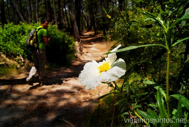 La senda que tenemos que seguir Ruta circular por La Pedriza, Parque Regional de la Cuenca Alta del Manzanares, Madrid