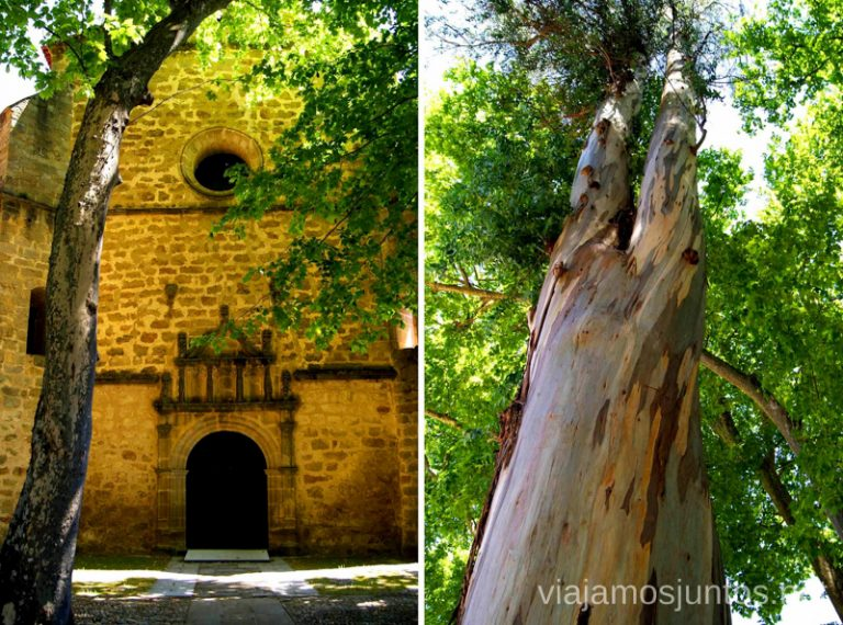 ¿A qué os parece el plátano? Ruta de mediodía al Monasterio de Yuste y pueblo-conjunto artístico Garganta la Olla, Extremadura